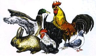 Société des Aviculteurs des Deux-Sévres