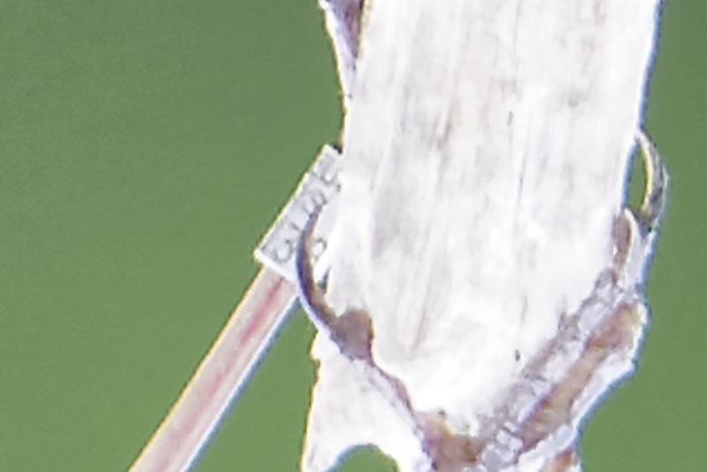 Gorge bleue a miroir Img_9813