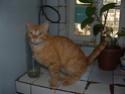 Avez vous eu un chat avec une queue anormalement longue ? Photo_37