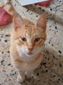 Le langage du chat Photo_55