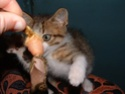 Pourquoi les chattes coupent toujours les moustaches de leurs chatons ? Photo_56