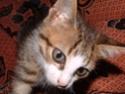 Pourquoi les chattes coupent toujours les moustaches de leurs chatons ? Photo_57