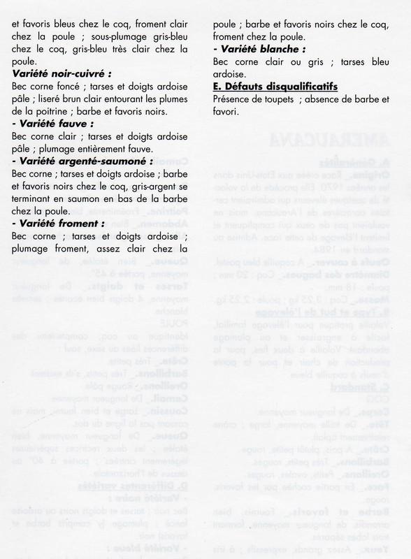 L'Améraucana standard et variétés Img02910