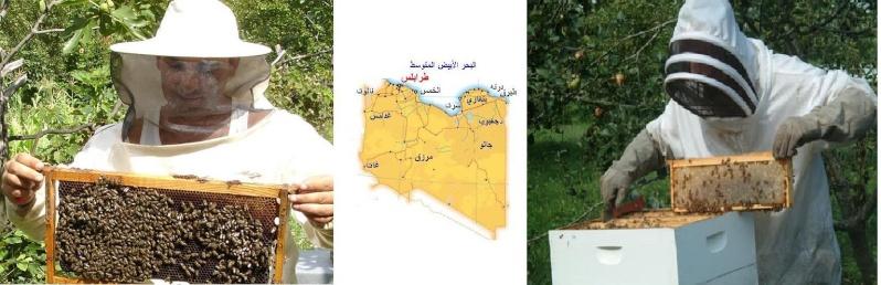 النحال الليبي