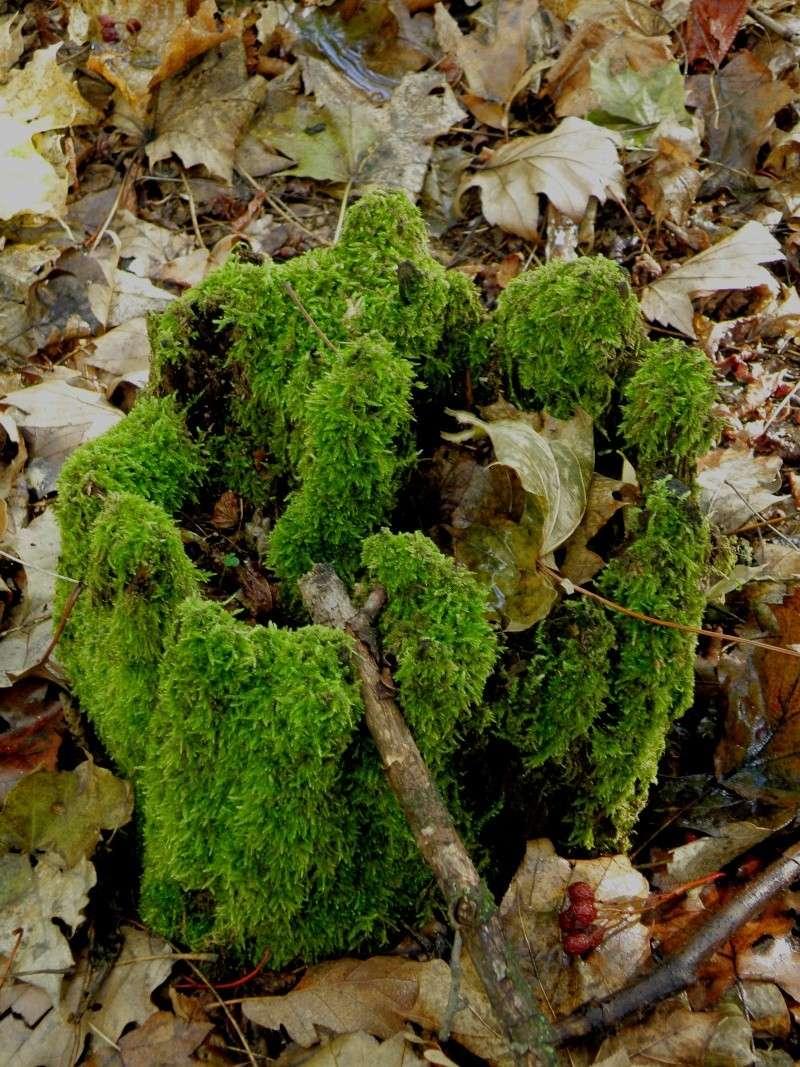 Champignons (octobre 2009 en Ardèche) et autres Marcla40