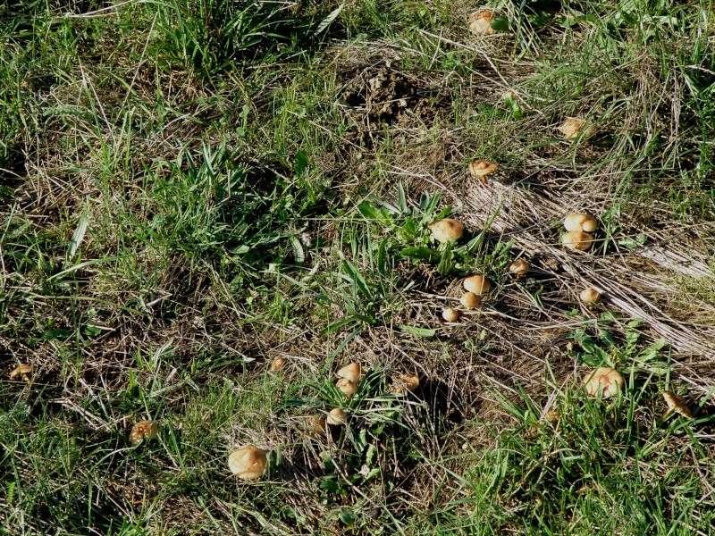Champignons (octobre 2009 en Ardèche) et autres Marcla50