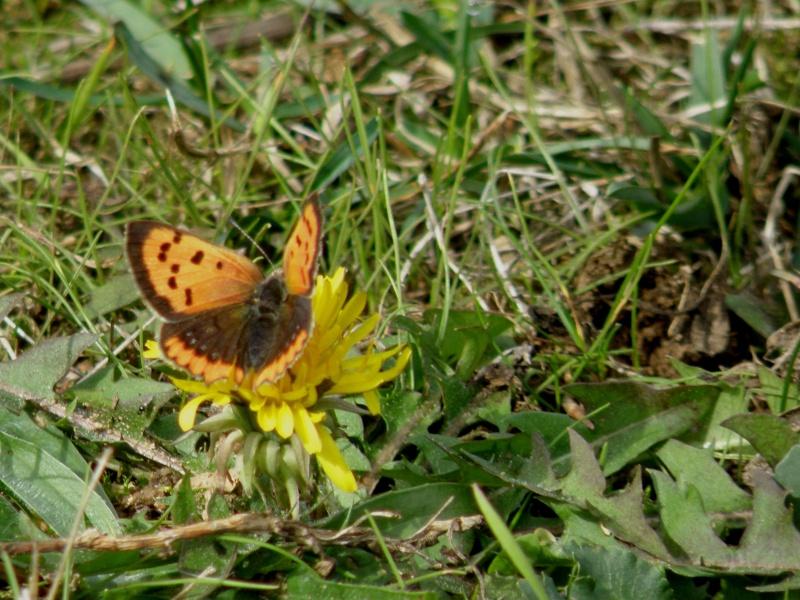 Champignons (octobre 2009 en Ardèche) et autres Marcla51