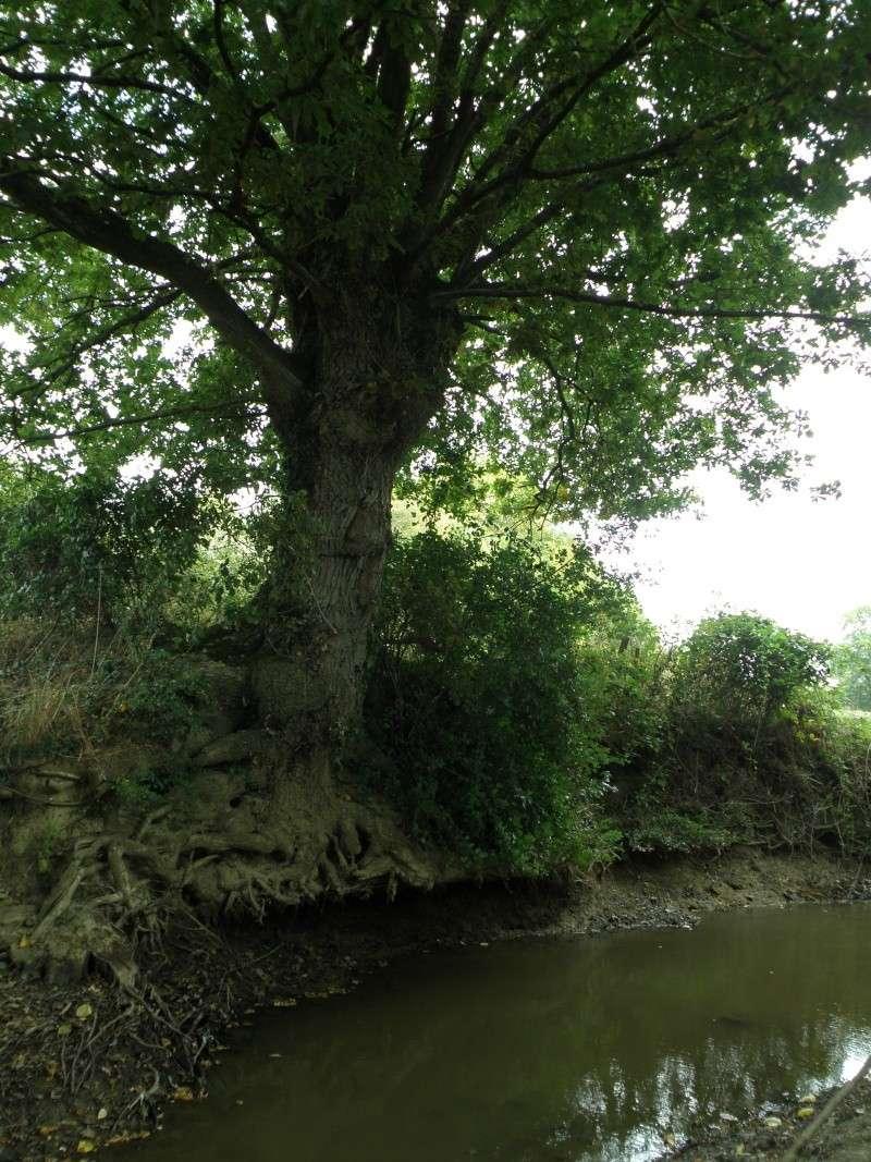 Sécheresse en Mayenne Vauvar16