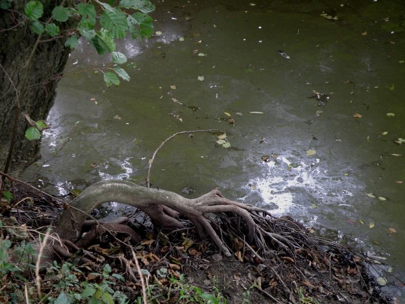 Sécheresse en Mayenne Vauvar25
