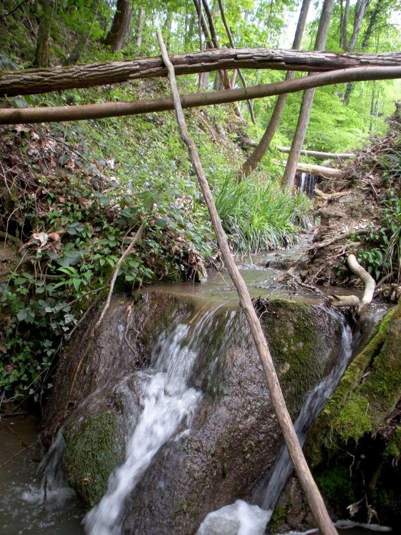 La forêt de Vallin (38) Dscn1313