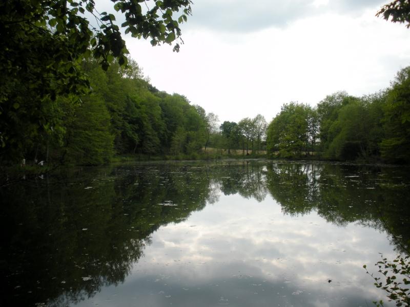 La forêt de Vallin (38) Dscn1314