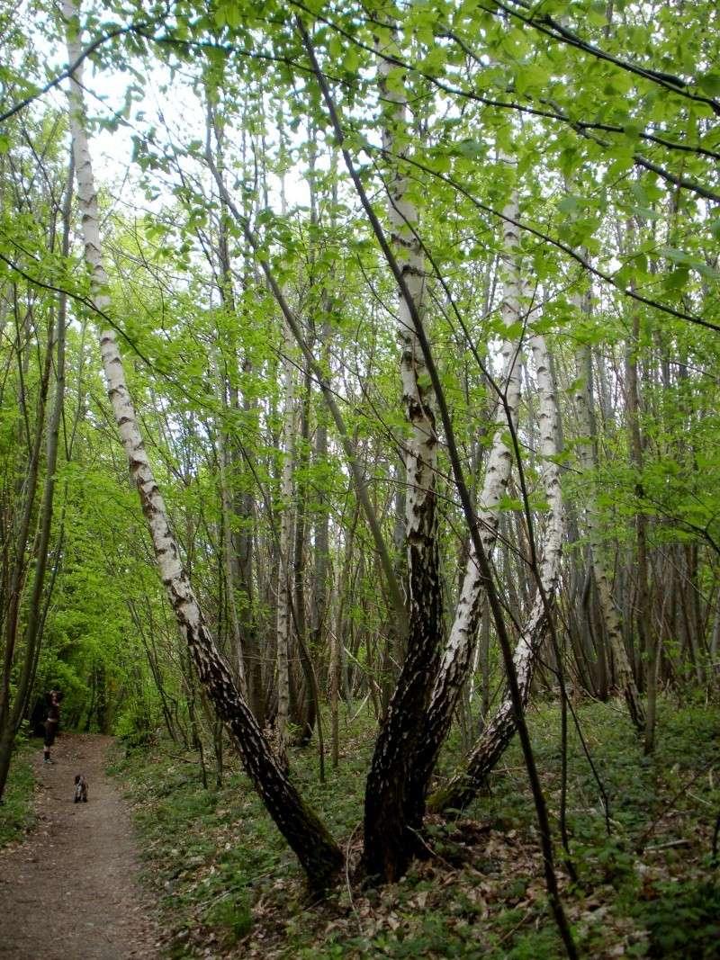 La forêt de Vallin (38) Dscn1315