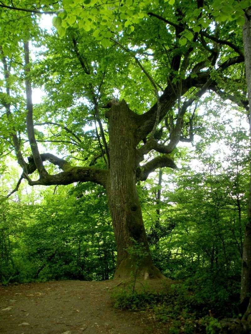 La forêt de Vallin (38) Dscn1316