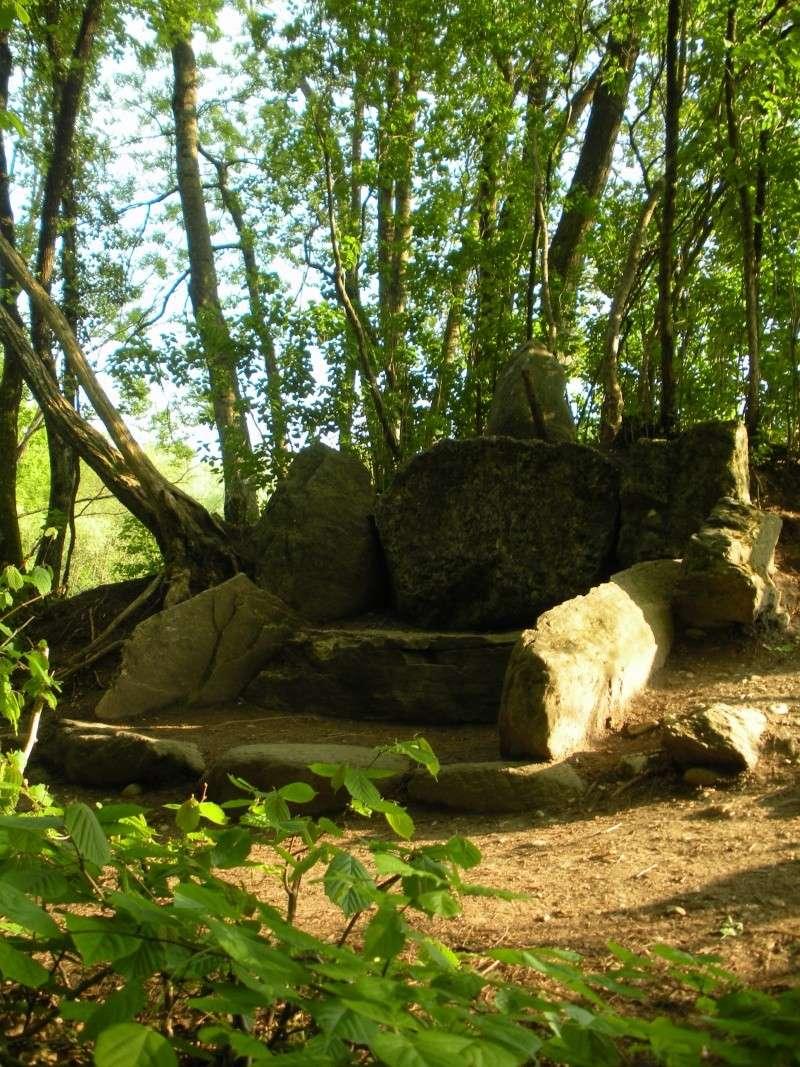 La forêt de Vallin (38) Dscn1413
