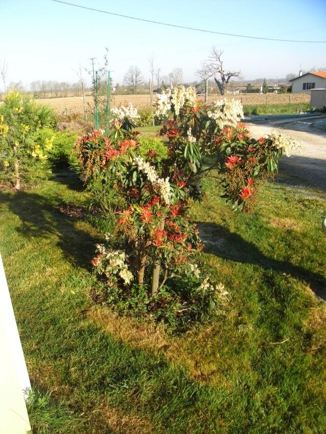 Le petit jardin....je ne pense pas vivre une éternité!!! 02110