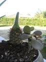 Drole de tete mes plantes grasses!!! Help Rimg0112