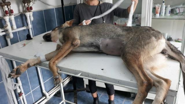Campagne de stérilisation - Fourrière Piatra Neamt - été 2020 - Appel terminé - Page 6 22775210