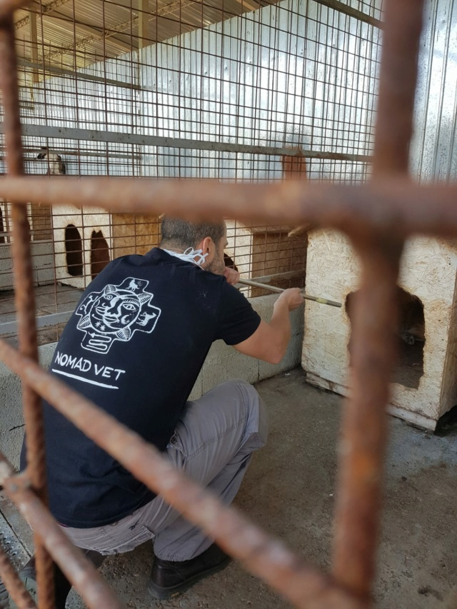 Campagne de stérilisation - Fourrière Piatra Neamt - été 2020 - Appel terminé - Page 6 286a2610