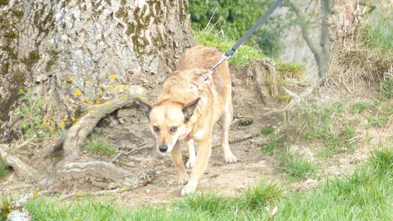 FOXY - femelle type renarde, née en avril 2012, taille petite à moyenne - adoptée par Lucien (67) - Page 6 P1160910