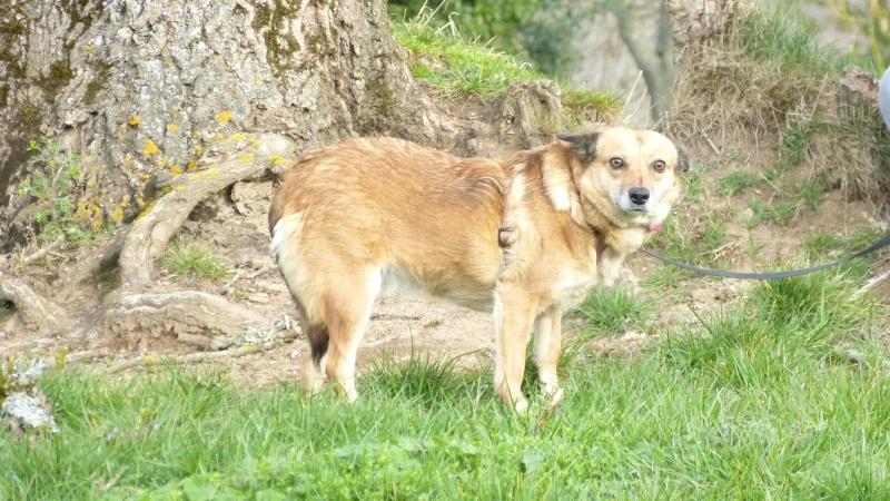FOXY - femelle type renarde, née en avril 2012, taille petite à moyenne - adoptée par Lucien (67) - Page 6 P1160911