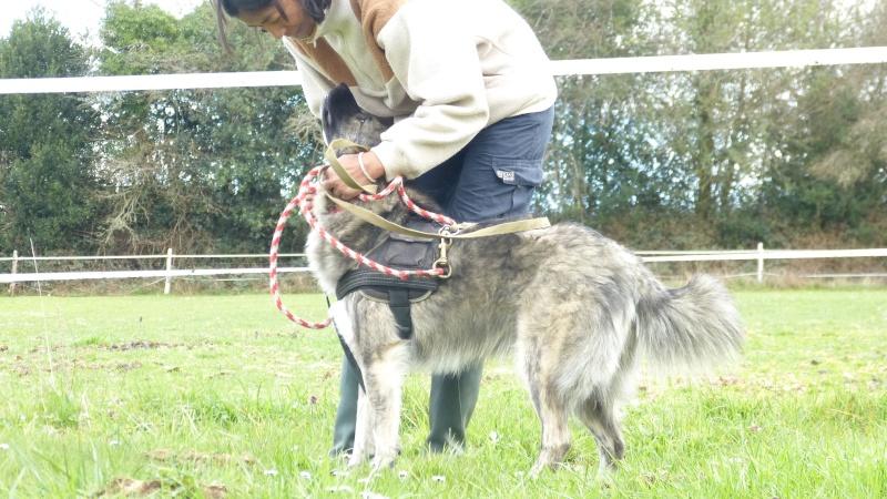 Post les chiens de Chantal P1170010
