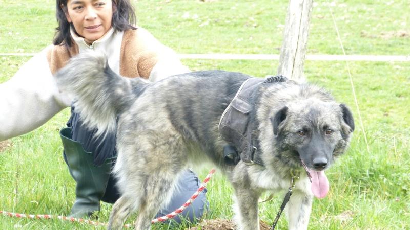 Post les chiens de Chantal P1170011