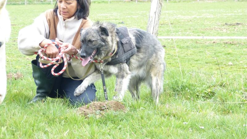 Post les chiens de Chantal P1170013