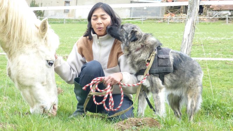 Post les chiens de Chantal P1170014