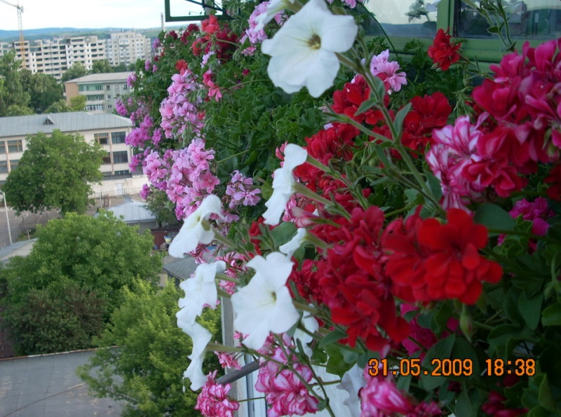 Didina Sava-Imagine Life - Pagina 2 Balcon16