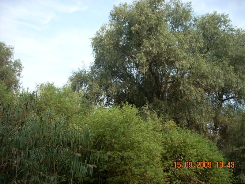 Dunarea si Delta vazute de la Mahmudia Dscn0015