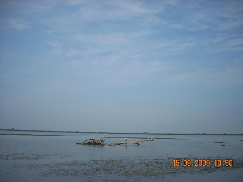 Dunarea si Delta vazute de la Mahmudia Dscn0019