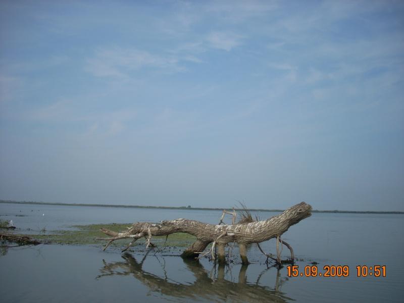 Dunarea si Delta vazute de la Mahmudia Dscn0021