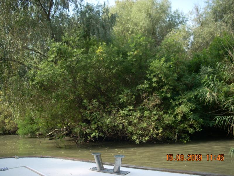 Dunarea si Delta vazute de la Mahmudia Dscn0024