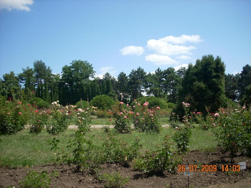 Gradina Botanica din Iasi Gradin13
