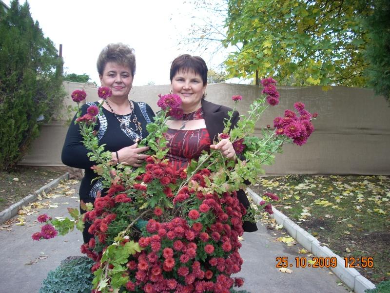 Expozitia de flori de toamna -Gradina Botanica A. Fatu-Iasi Gradin26