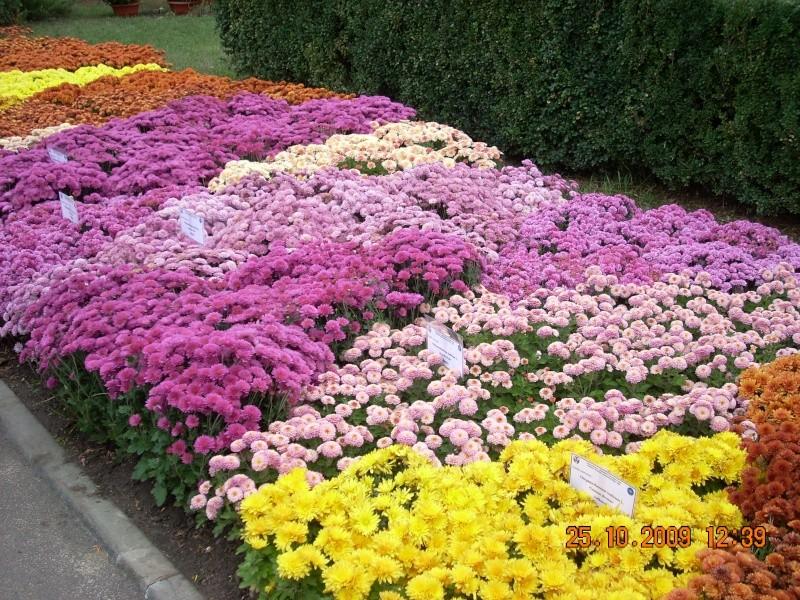 Expozitia de flori de toamna -Gradina Botanica A. Fatu-Iasi Gradin37