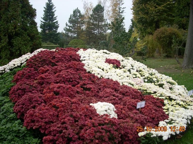 Expozitia de flori de toamna -Gradina Botanica A. Fatu-Iasi Gradin38