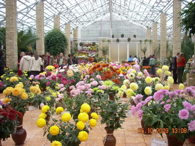 Expozitia de flori de toamna -Gradina Botanica A. Fatu-Iasi Gradin39