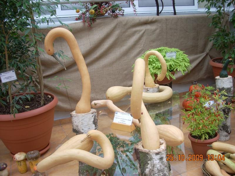 Expozitia de flori de toamna -Gradina Botanica A. Fatu-Iasi Gradin41