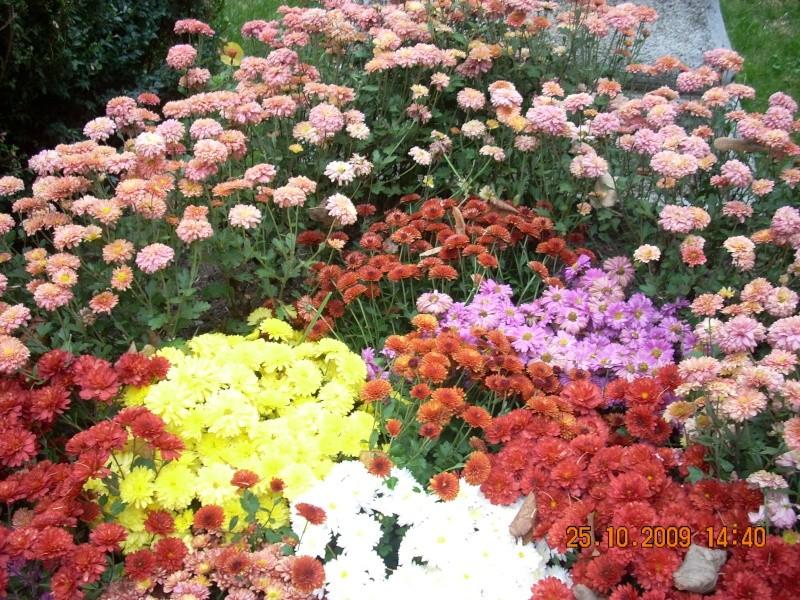 Expozitia de flori de toamna -Gradina Botanica A. Fatu-Iasi Gradin42