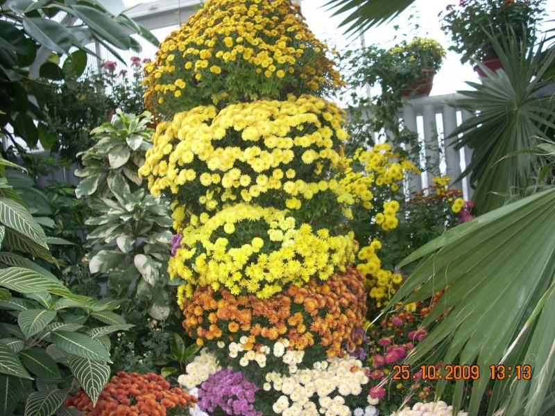 Expozitia de flori de toamna -Gradina Botanica A. Fatu-Iasi Gradin43