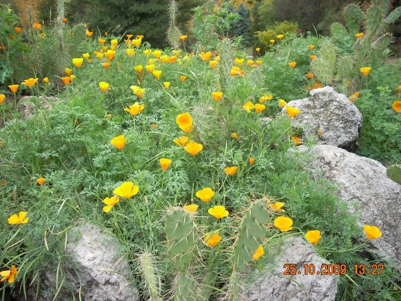 Expozitia de flori de toamna -Gradina Botanica A. Fatu-Iasi Gradin45