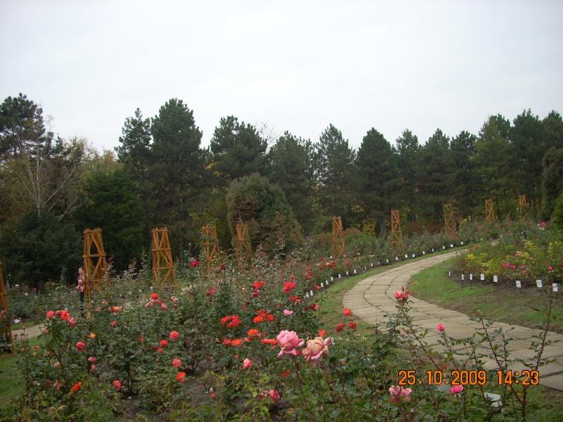 Expozitia de flori de toamna -Gradina Botanica A. Fatu-Iasi Gradin46