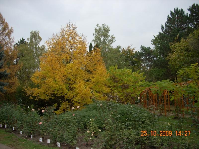 Expozitia de flori de toamna -Gradina Botanica A. Fatu-Iasi Gradin47