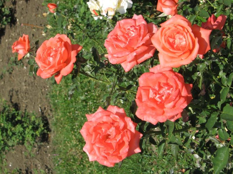 Gradina Botanica din Iasi Img_0810