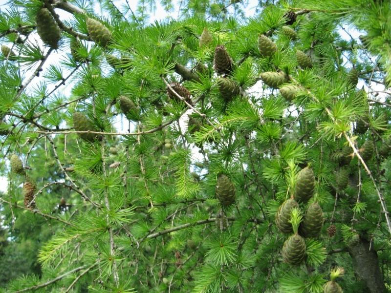 Gradina Botanica din Iasi Img_0910