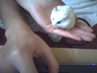 Post a Pic of ur Pets! N8166225