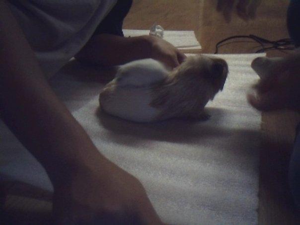 Post a Pic of ur Pets! N8166228