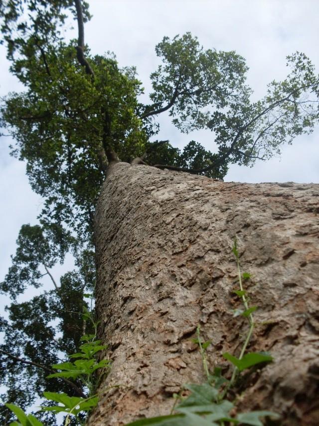 บรรยากาศธรรมชาติของไหล่หินตะวันตก(หมู่6) Sdc12410