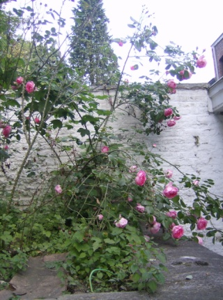 je ne sais pas quoi faire de mon jardinet Photo_12